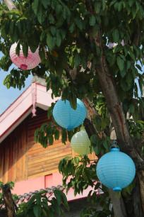 挂在榕树上的彩色灯笼