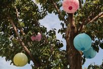 挂着彩色灯笼的榕树