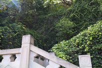 汉白玉栏杆上的爬山虎