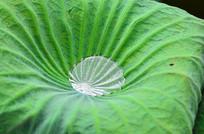 荷叶叶子水珠纹理