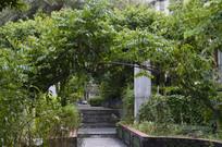 药园绿植藤架过道