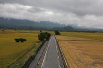 稻田里的公路