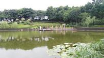 公园湖泊绿树风景