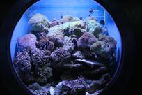 海底世界缩小版