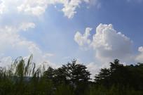 蓝天白云逆光树木剪影