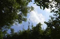 蓝天白云树木竹子
