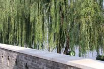 青砖墙与垂柳