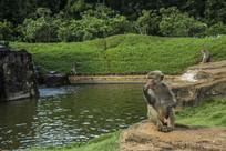 猴子托腮思考