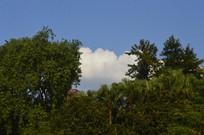 树木风景树蓝天白云