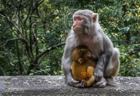 襁褓中的猴子