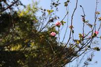 长在枝头的粉色小花
