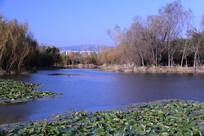 平静湛蓝的湖面