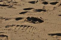 沙滩上的脚印