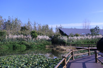 湿地中的池塘
