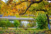 水塘边的树木