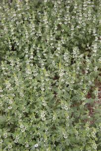 星星点点状的绿草花丛