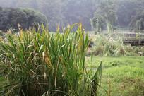 茅家埠小溪与草丛