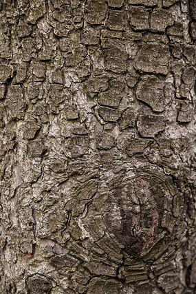松树皮表面纹理肌理背景素材