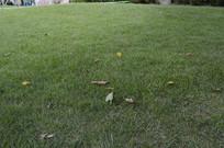 一片草坪草地