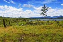 杜鹃湖草地风景
