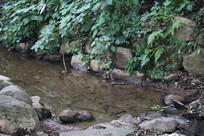 杭州茅家埠水塘与草丛