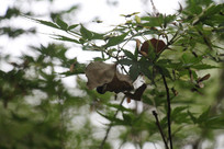 茅家埠树上枝叶特写