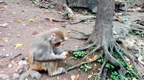 手拿桔子皮的猴子