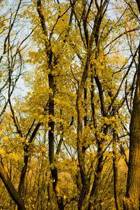 树木树干树叶