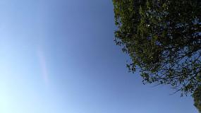 仰拍蓝天下的树木枝叶