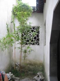 白墙拐角处的翠竹