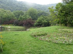 草地上的绿树与小花