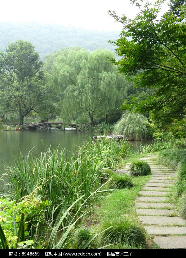 长满青草与大树的小径图片