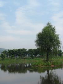 湖边的青草地与大树