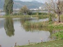 湖面上掠过的白鹭