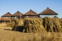 粮仓玉米杆柴垛