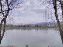 柳树框中的河岸美景