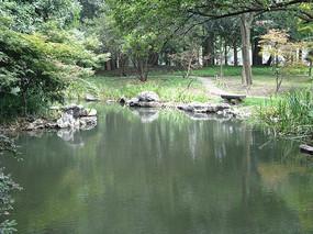 绿树与青石环绕的池塘