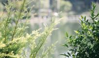 秋日里的绿植