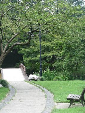 树林中的小路与长椅
