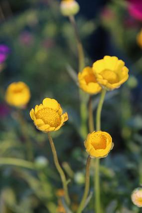 黄色的小花朵
