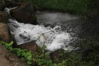 茅家埠草丛下水流激溅