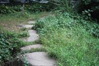 茅家埠草丛与石头路