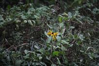 茅家埠荷塘边草丛与黄色花朵