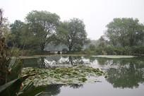茅家埠水潭和荷叶全景