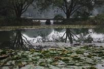 茅家埠水潭和荷叶远景