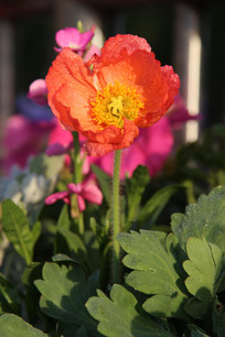 盛开的红色花朵花蕊