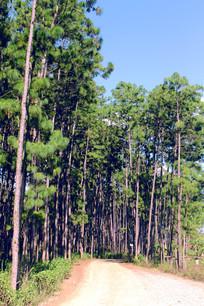 普者黑树林