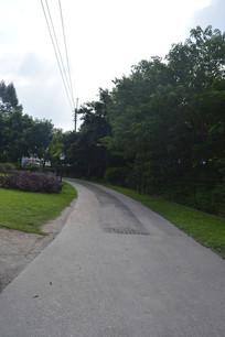 陈田花园道路与树木