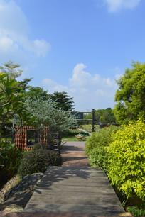 陈田花园木栈道及绿化景观