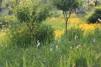 翠绿的草丛